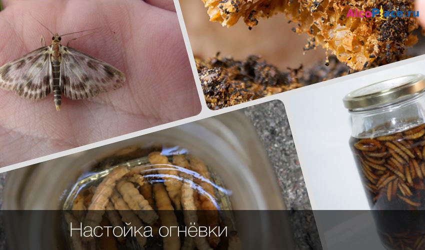 экстракт пчелиной огневки