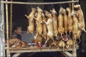 лечения туберкулеза собачьим мясом